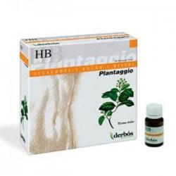Plantaggio HB